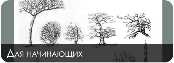 Основы рисования в фотошопе