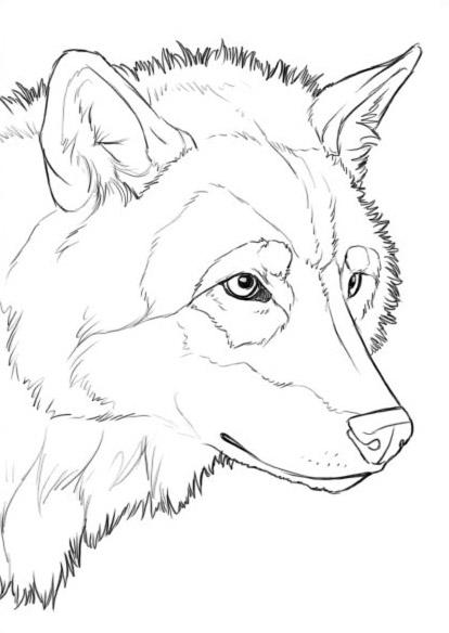 Как рисовать волка часть 1