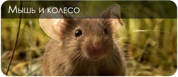 Колесико мыши в фотошопе