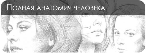 Анатомия человека для художника
