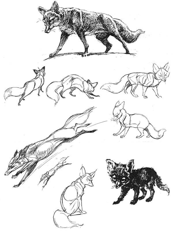 Картинки нарисованных лис