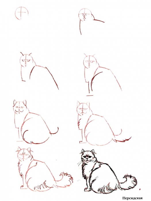 Как нарисовать кота