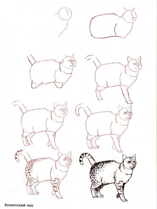 Как нарисовать красивого кота