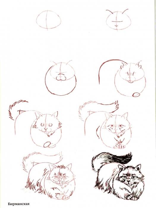 Гаванская бурая кошка