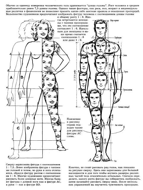 Пропорции рисования человека