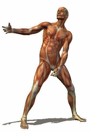 Рисование фигуры человека