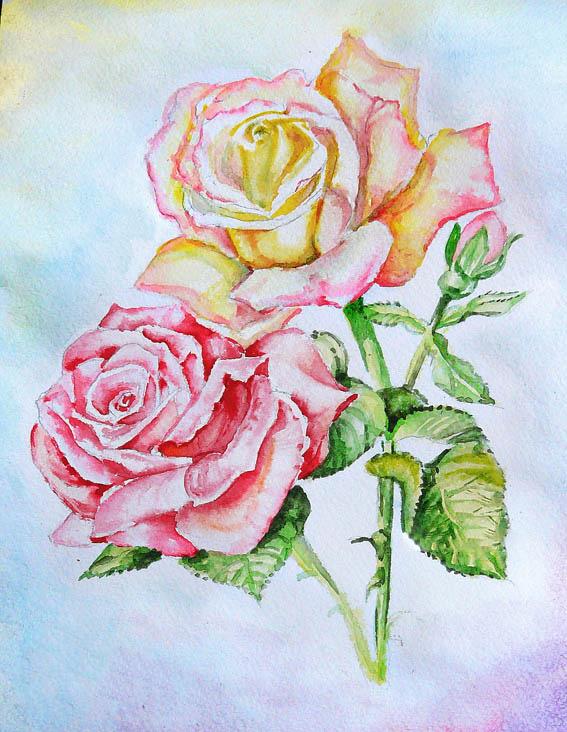 Картинки нарисованных роз